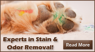Pet Stain and Odor Removal Raleigh NC